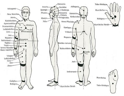 Insuficiencia de Fuego de Ming Men (Yang de Riñón) Síntomas: Impotencia, cara blanca, vidriosa, vértigo, aspecto anímico decaído, debilidad en la zona lumbar y las rodillas, lengua pálida, capa blanca, pulso sumergido y filiforme. Principio terapéutico: Tonificación de Yang de Riñón.  Fitoterapia: Wu Zi Yan Zong Wan o Zan Yü Dan modificados  Acupuntura: Ren.4 (Guan Yüan) Du.4 (Ming Men) V.23 (Shen Shu) R.3 (Tai Xi) B.6 (San Yin Jiao)  Afectación del Corazón y Bazo Síntomas: Impotencia, aspecto anímico decaído, sueño perturbado, tez sin brillo, lengua pálida con capa fina y viscosa, pulso filiforme etc.  Principio terapéutico: Tonificación del Corazón y Bazo.  Fitoterapia: Gui Pi Tang modificado.  Acupuntura: Ren.3 (Zhong Ji) Du.4 (Ming Men) V.20 (Pi Shu) E.36 (Zu San Li) C.7 (Shen Men) B.6 (San Yin Jiao)  Miedo que afecta a Riñón Síntomas: Impotencia, estado anímico deprimido, tímido y dudoso, palpitaciones, insomnio, lengua pálida tirando a verdosa o cubierta de una capa fina viscosa, pulso de cuerda y filiforme.  Principio terapéutico: Tonificación del Riñón, sedación del sistema nervioso central. Fitoterapia: Da Bu Yüan Jian añadiendo Semen Zizyphi spinosae (SUAN ZAO REN) y Radix Polygalae (YÜAN ZHI) para tonificar el Corazón y sedar el sistema nervioso central.  Acupuntura: Ren.3 (Zhong Ji) V.52 (Zhi Shi) V.18 (Gan Shu) H.3 (Tai Chong) Vb.34 (Yang Ling Qüan) V.15 (Xin Shu) C.7 (Shen Men)  Descenso del Calor y Humedad Síntomas: Impotencia, orina escasa y oscura, fatiga en los miembros inferiores, capa de la lengua amarilla y viscosa, pulso sumergido y resbaladizo, o pulso débil, flotante, resbaladizo y rápido etc.  Principio terapéutico: Dispersión de la Humedad y el Calor.  Fitoterapia: Zhi Bai Di Huang Wan modificado.  Acupuntura: Ren.3 (Zhong Ji) V.23 (Shen Shu) E.36 (Zu San Li) B.6 (San Yin Jiao) V.28 (Pang Guang Shu) E.40 (Feng Long)