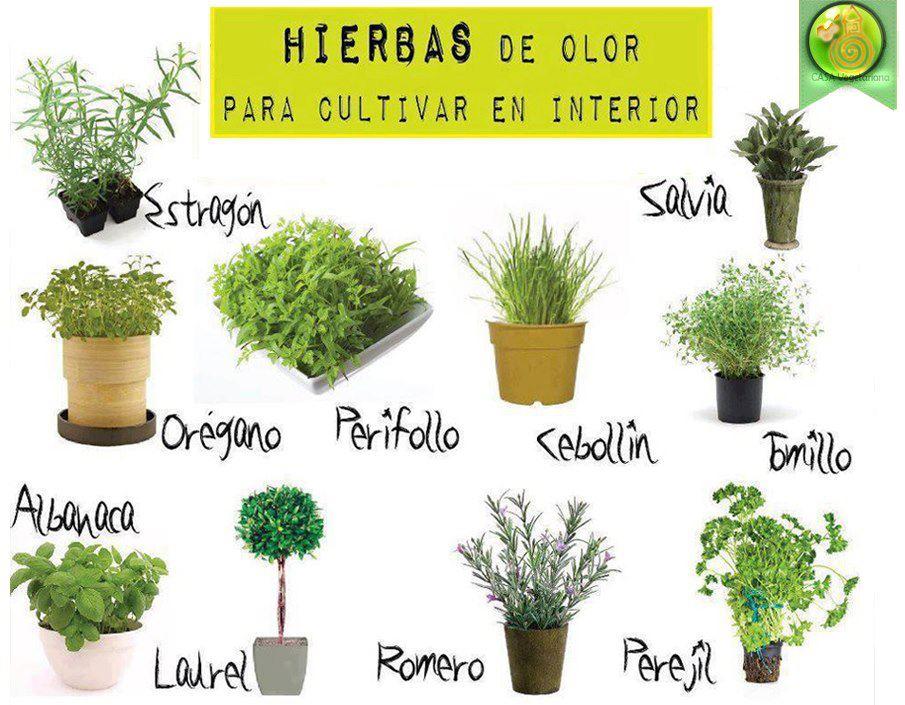 Feng shui yin y yang int rprete energ tico for Cuales son las plantas para interiores