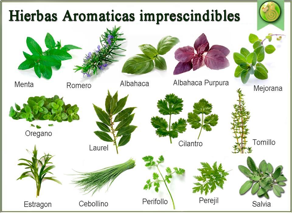 Vademecum int rprete energ tico for 5 nombres de plantas ornamentales