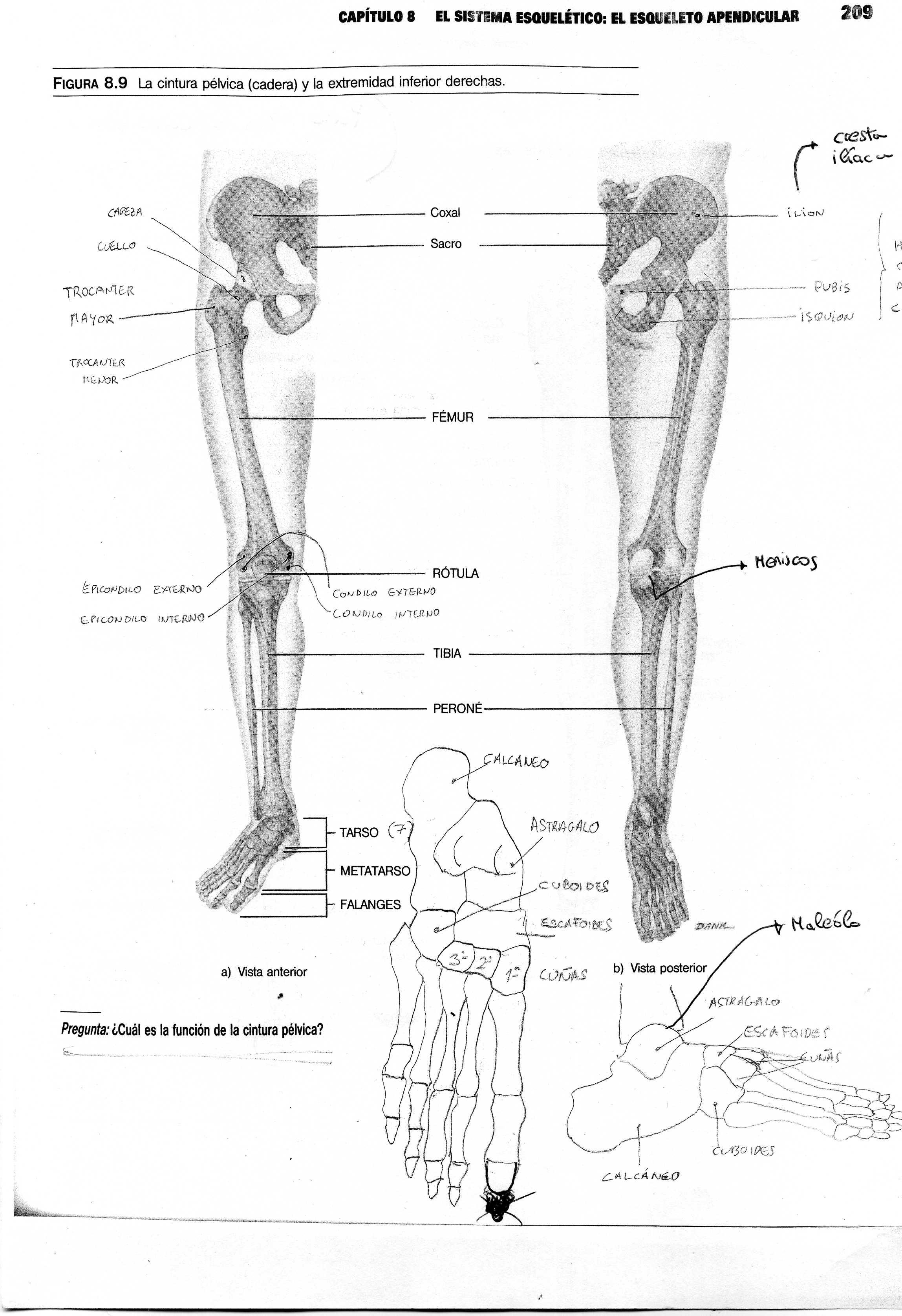 cuerpo humano | Intérprete Energético