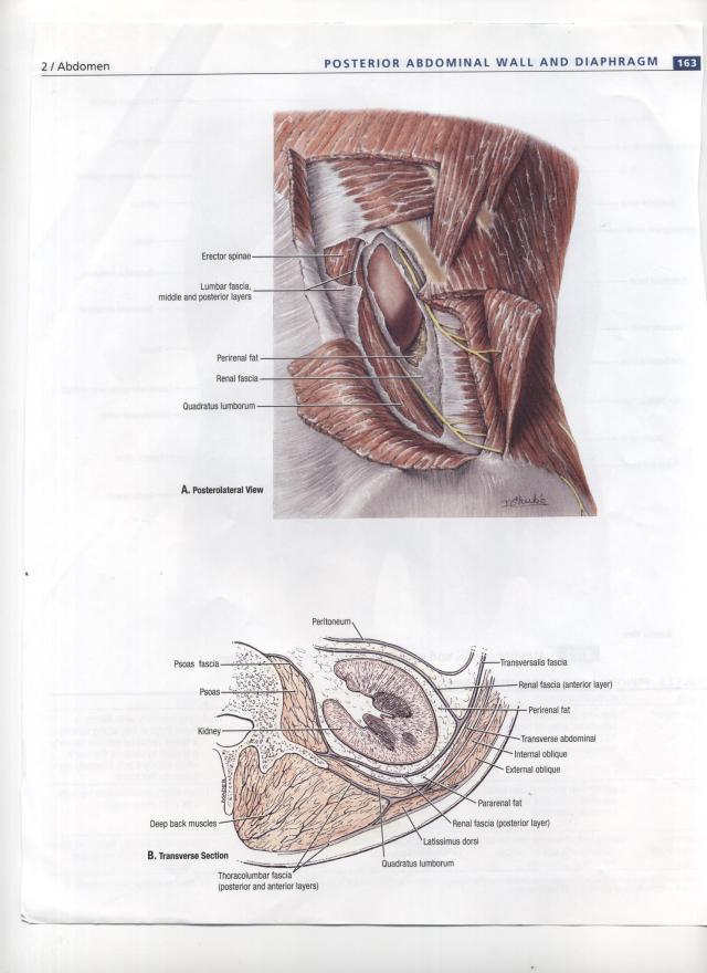 Imagen (4)