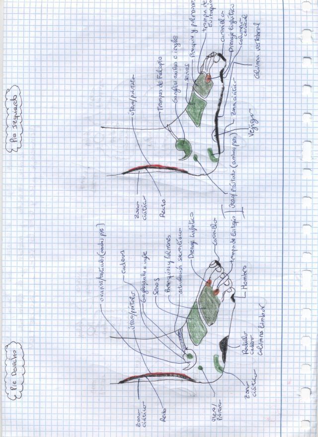 Imagen (6)