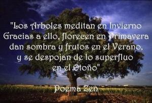 arboles meditan