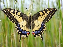 mariposa23