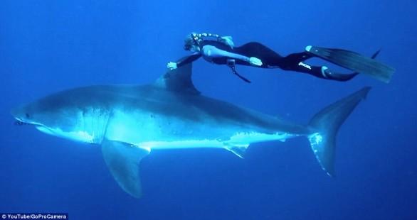 ocean_ramsey_tiburones-586x310