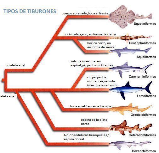TIPOS_DE_TIBURONES